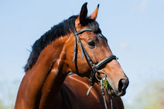 Handsome stud Stock Photography