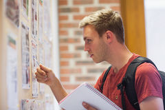 Handsome student studying notice board Stock Photography