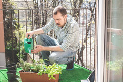 Handsome stylish man gardening and watering Royalty Free Stock Image