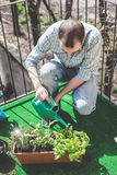 Handsome stylish man gardening and watering Stock Image