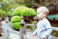 Handsome toddler boy Royalty Free Stock Photo