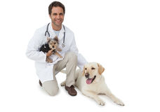 Handsome vet posing with yorkshire terrier and yellow labrador Royalty Free Stock Photos