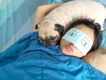 Handsome woman resting and sleeping rest with her pug dog annoy. On bed in the bedroom. Pet and owner funny concept. Lonely woman and her best friend royalty free stock photo