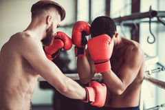 Handsome young boxers. Handsome young muscular boxers with bare torsos are practicing at the fight club Royalty Free Stock Photos
