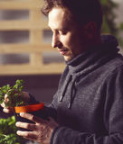 Handsome grower carefully growing and checking plants indoor. Royalty Free Stock Images