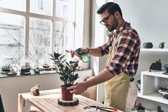 Keeping plants refreshed. Handsome young man in apron watering potted plant while standing in small garden center Stock Images
