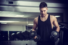Handsome young man exercising biceps in gym. Handsome muscular young man exercising biceps in gym with dumbbells Royalty Free Stock Photography