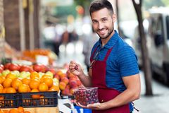 Handsome young salesman holding cherries box while looking at camera in fruitshop. Portrait of handsome young salesman holding cherries box while looking at royalty free stock image