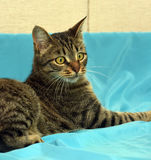 Handsome young tabby cat stock photos