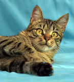 Handsome young tabby cat stock photography