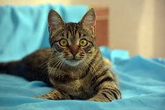 Handsome young tabby cat royalty free stock photography