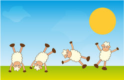Handstand sheep Stock Images