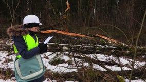 Handstil för kvinnaskogsbrukanställd nära förstörda träd arkivfilmer