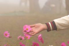 Handtagrosa färgen blommar i dimman Arkivbilder
