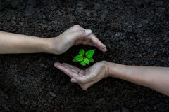 HandTeam Work förminskar det skyddande trädet som växer för, global uppvärmningjord Fotografering för Bildbyråer