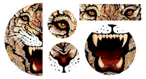 Handteckning av tigerframsidan stock illustrationer