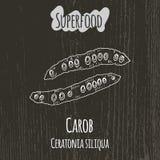 Handteckningsillustration av carobfröskidor Ceratonia Royaltyfri Foto