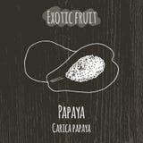 Handteckningsillustration av papayaen carica papaya Arkivbild
