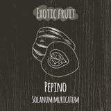 Handteckningsillustration av pepinoen Solanum Arkivbild