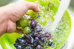 Handtvätt nya druvor arkivfoto