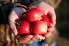Handvol appelen Stock Foto