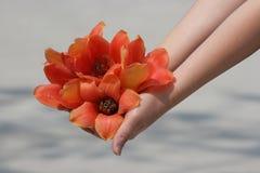 Handvol Tropische Bloemen stock foto
