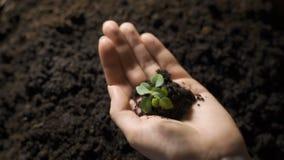 Handvol van Grond met Jonge plant het Groeien Concept en symbool van groei, zorg die, duurzaamheid, de aarde de beschermen stock videobeelden