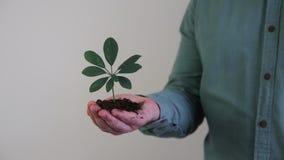 Handvol van Grond met Jonge plant het Groeien stock videobeelden