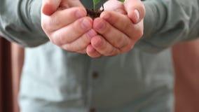 Handvol van Grond met Jonge plant het Groeien stock video