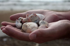 Handvol zeeschelpen Stock Afbeelding