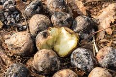 Handvolaardappelen in de schil Aardappels met brand Royalty-vrije Stock Fotografie