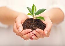 Handvoll Boden mit dem Jungpflanze-Wachsen Lizenzfreies Stockfoto