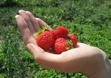 Handvoll der Erdbeere auf Hand der Frau stockbild