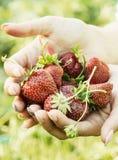 Handvoll frische Erdbeeren Lizenzfreie Stockfotografie