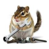 Handwerker Chipmunk mit Schlüssel Stockfoto