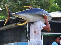 Handwerkliche Fischerei des Gelbflossen-Thunfischs in Philippines#11 Lizenzfreie Stockfotos