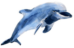 Handwork watercolor illustration of a  Dolphin Royalty Free Stock Images
