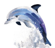 Handwork watercolor illustration of a  Dolphin Stock Photos