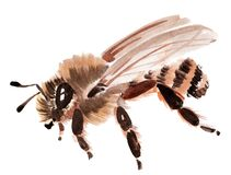Handwork watercolor illustration of an insect bee