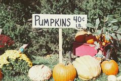 A handwritten sign marks Pumpkins for sale. Surrounded by pumpkins and squash Royalty Free Stock Images