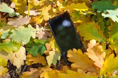 Handy und gelber Herbstlaub stockfoto