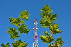 Handykommunikationsradio-Fernsehturm, Mast, Zellmikrowellenantennen und Übermittler gegen den blauen Himmel und die Bäume Stockfotografie