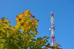 Handykommunikationsradio-Fernsehturm, Mast, Zellmikrowellenantennen und Übermittler gegen den blauen Himmel und die Bäume Stockbilder