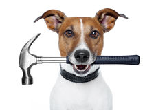 Handyman dog Stock Image