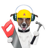 Handyman dog. Handyman and craftsman dog with hammer and saw stock photo