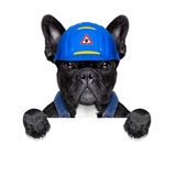 Handyman dog Royalty Free Stock Image