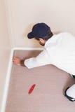 Handyman laying down a carpet Royalty Free Stock Photos