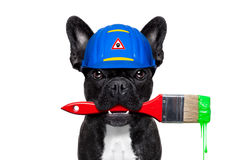 Handyman painter   dog Stock Photos