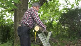 Handyman saw oak logs by hand. Man using an easel and a wood saw to cut logs stock footage
