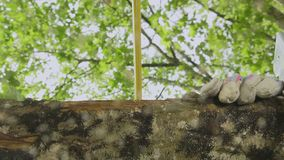 Handyman saw oak logs by hand stock video footage